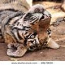 Tamed The Tiger w Steve Pearce