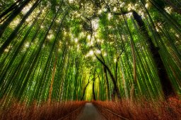 Strange Bamboo
