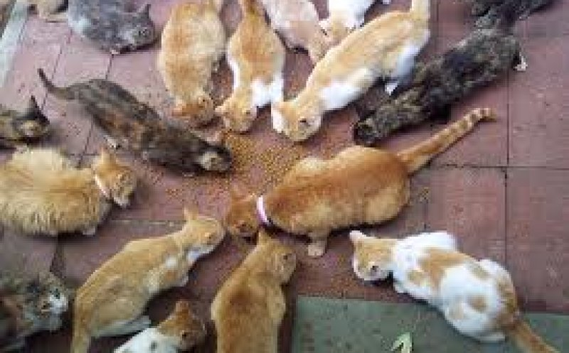 Barry the Cat Hoarder