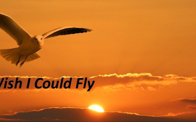I Wish I Could Fly