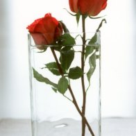 Roses in a Glass