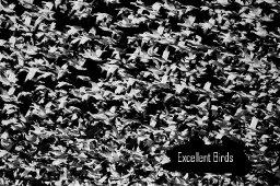 Excellent Birds - A Bird Is A Dinosaur