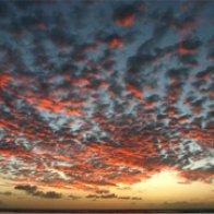 Under a red bleu sky