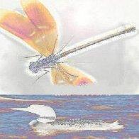 Dragonfly & Loon (collab. Ed Drury)