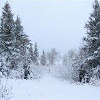 Snowstorm (Gary Carciello  -  Doctor C)