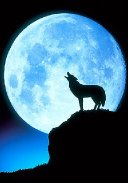 "The ""Wolf Moon"""