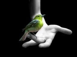 Bird In The Hand (Farrell and DrC)