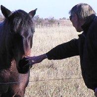 Petn Horse