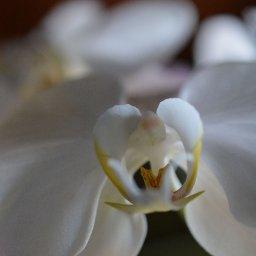 orchid 9.jpg