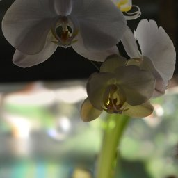 ORCHID 7 TOUCHED.jpg