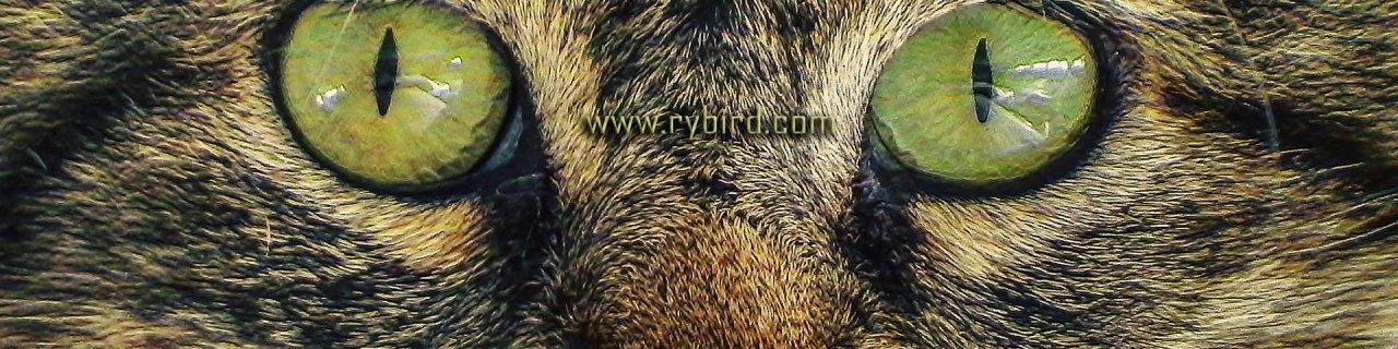 Rybird