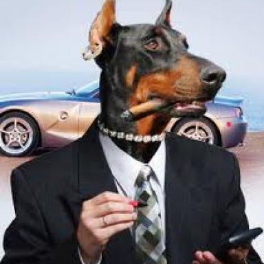 Put on the dog