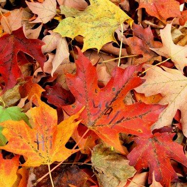 October Leaves ~ Gerald Wiebe