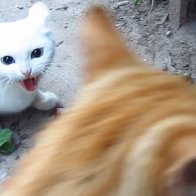 sally sue the badass rescue cat Remix