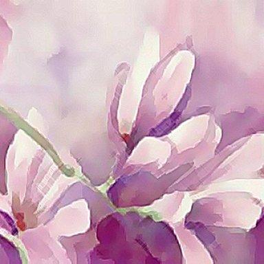 Sweet Magnolia (Corrado, Slap Johnson)