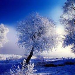 morning-winter-high-quality-wallpaper455.jpg