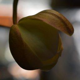 orchid 2 for net.jpg